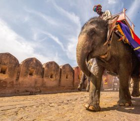 Indian man on elephant